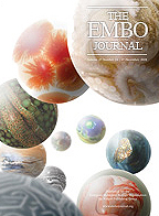 The EMBO Journal の表紙