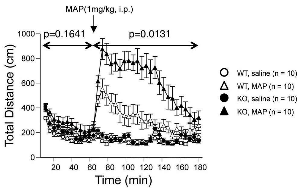 Gomafu lncRNAノックアウトマウスは覚醒剤メタンフェタミンに対する応答性亢進を伴うマイルドな自発運動活性の上昇を示す