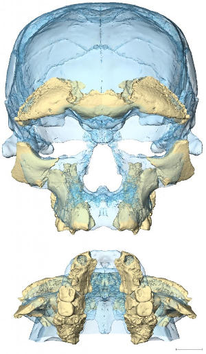 Modern conditions for the facial skeleton were already reached 300 thousand years ago in the earliest forms of Homo sapiens known to date.