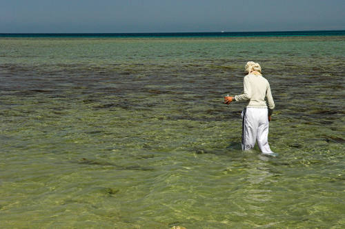 A student on a biology field course from Cairo University studying marine life in the Red Sea.