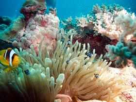 Red Sea coral reefs are thought to have high resilience towards climate change.