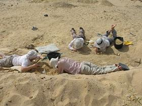 Paleontologists excavating within the Fayum Depression that produced the  Nosmips  fossils.