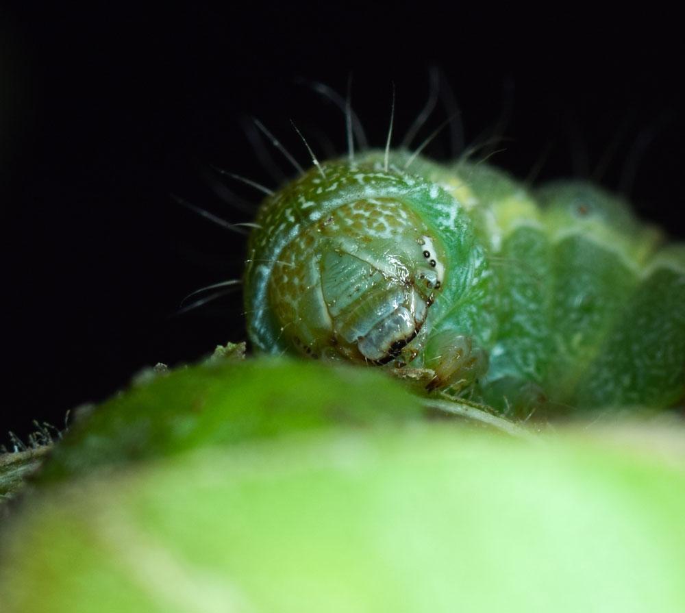 Nature ハイライト:害虫のBt毒...