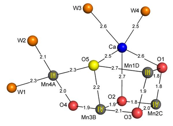 光合成の鍵を握る光化学系Ⅱ複合体の結晶構造を解明   特集記事 ...